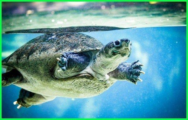 Hewan Di Air Dan Darat Hewan Hidup Di Air Darat Hewan Air Darat Hewan Yang Hidup Di Air Tawar Adalah Hewan Yang Hidup Di Air Dan Hewan Gambar Hewan Binatang