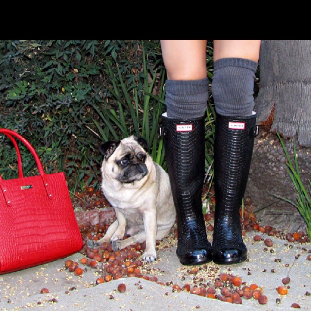 Hunter boots are GOD GIVEN ;)Dogs Accessories, Hunter Boots, Rainboots, Hunters Wellies, Rain Boots, Hunters Carnaby, Hunters Boots, Rain Dance, Kate Spade