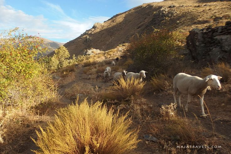 Sheeps in Sierra Nevada National Park, Andalusia, Spain