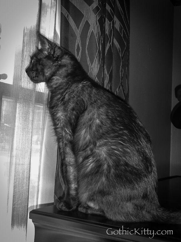 Phoebe watching her world