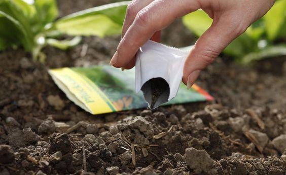 10 Tipps rund um die Aussaat -  Die Aussaat ist die wichtigste Vermehrungsmethode für Gemüse und Blumen. Wenn Sie diese Hinweise befolgen, steht einer erfolgreichen Anzucht nichts im Wege.