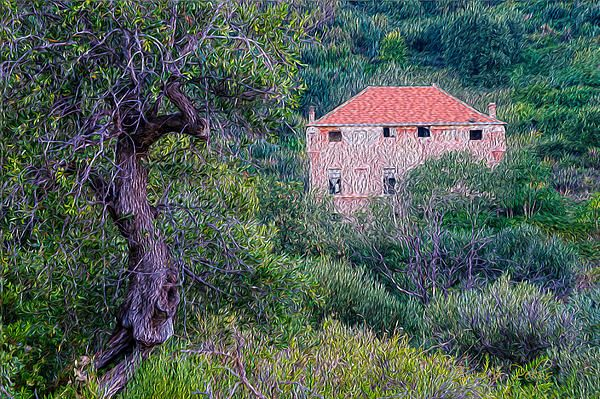 THE ABANDONED PINK FORTRESS HOUSE AND THE OLIVE TREE
