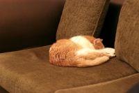 Enlever les poils d'animaux du canapé