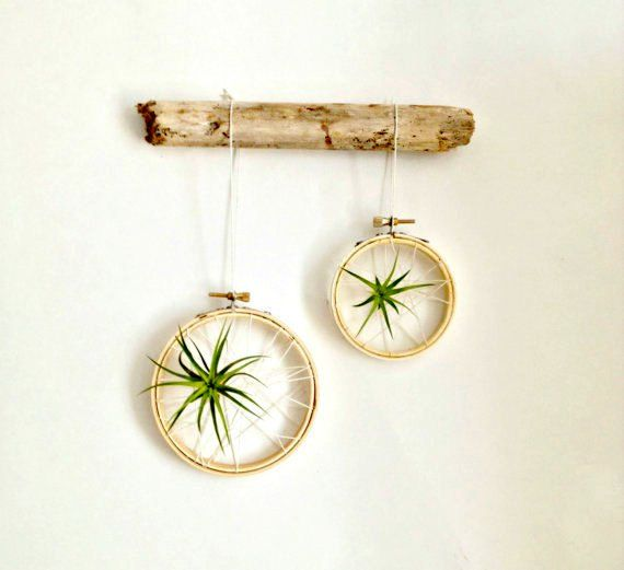 Hey, I found this really awesome Etsy listing at https://www.etsy.com/listing/186743458/caught-in-a-web-air-plant-on-embroidery