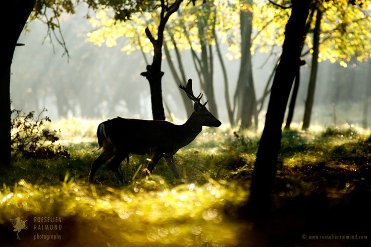 Fallow Deer in a Fairy Forest by thrumyeye on DeviantArt