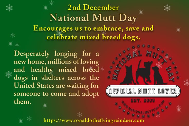#today 2nd December is #NationalMuttDay Created in 2005 by Celebrity Pet Expert and Animal Welfare Advocate, Colleen Paige. #NationalFrittersDay #SpecialEducationDay #muttday #nationalmutt #Dog #dogs #doglovers
