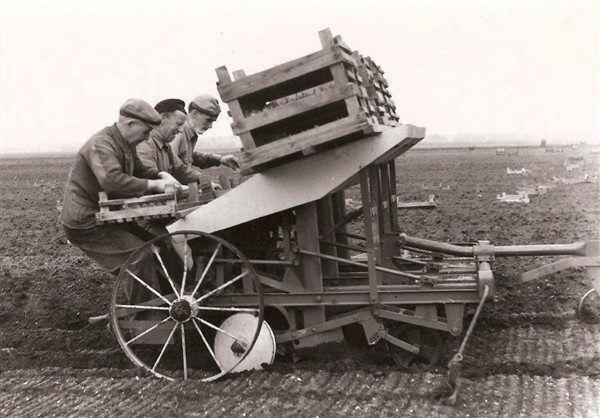 aardappelen-poters