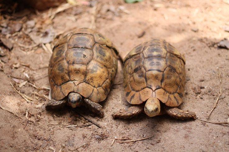 Schildkröten in Nungwi – Backpacking Sansibar Rundreise