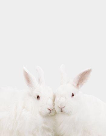 ©Sharon Montrose_Animal Photography 182