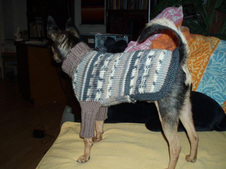 Koiran villapaita, etulahkeet