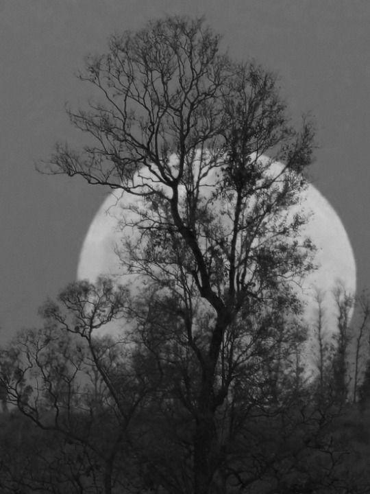 #Arboles #Trees #Luna #Moon