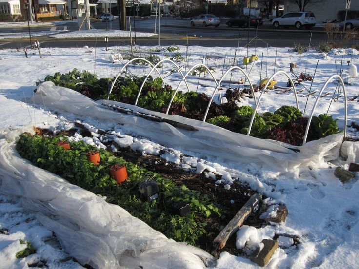 Winter Gardening Tips: Best Winter Crops And Cold Hardy Varieties