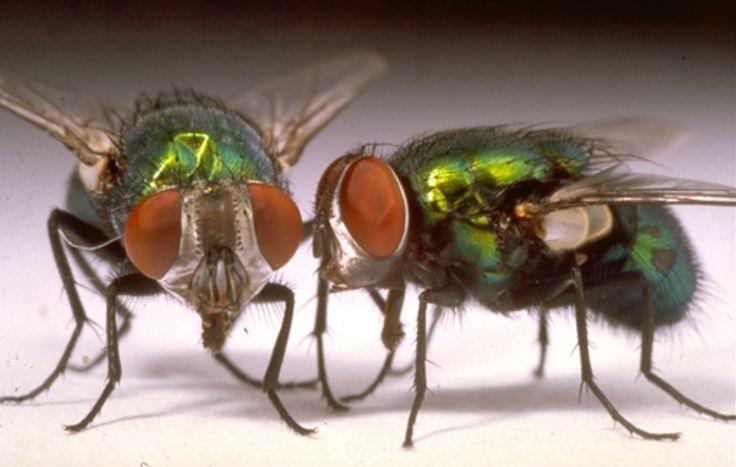 voici comment lutter contre les mouches avec des fleurs. Black Bedroom Furniture Sets. Home Design Ideas