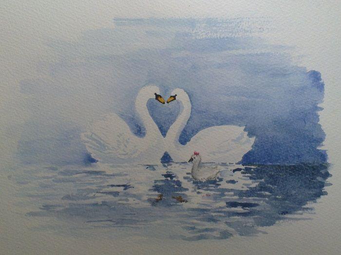 Swan family & love