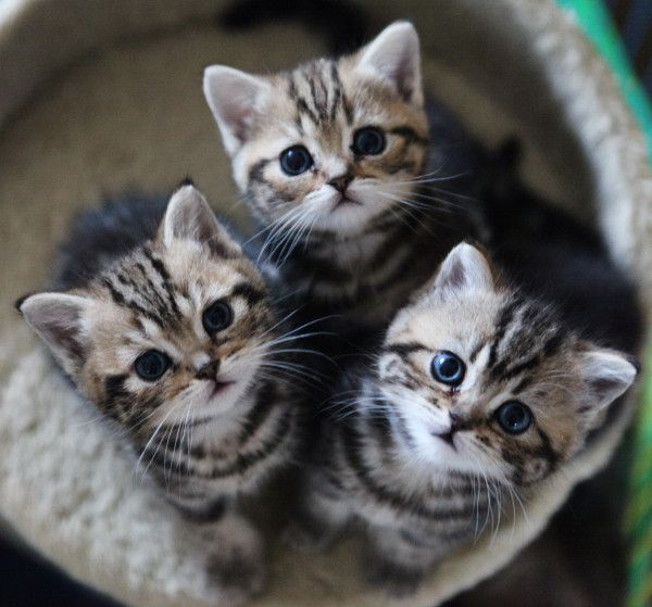 I want one...her name will be Stella with a pink collar!                           ironically my cats name is Stella and she looks just like these kittens ❤
