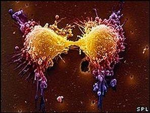 Les cellules du cancer s'alimentent de...
