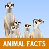 """Animal Fact Guide is a site for K-8. Facts with photos for 39 animals. """"Each animal facts article is printer-friendly and covers a range of topics, such as the animal's physical characteristics, habitat (with a distribution map), diet, breeding patterns, unique traits and behavior,  conservation and tips on what you can do to help."""" """"Did you know that elephants hold grudges or that cougars can't roar? Learn interesting animal facts and download free coloring pages."""" Going in Animals."""