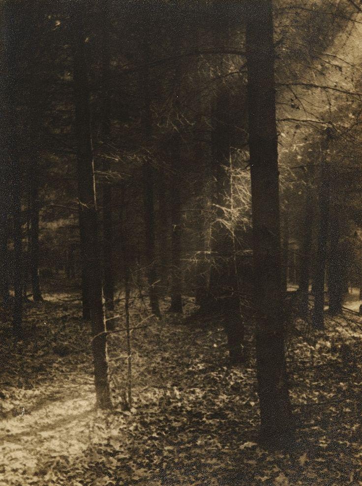Josef Sudek (Czech, 1896-1976),Forest Glade, 1930's