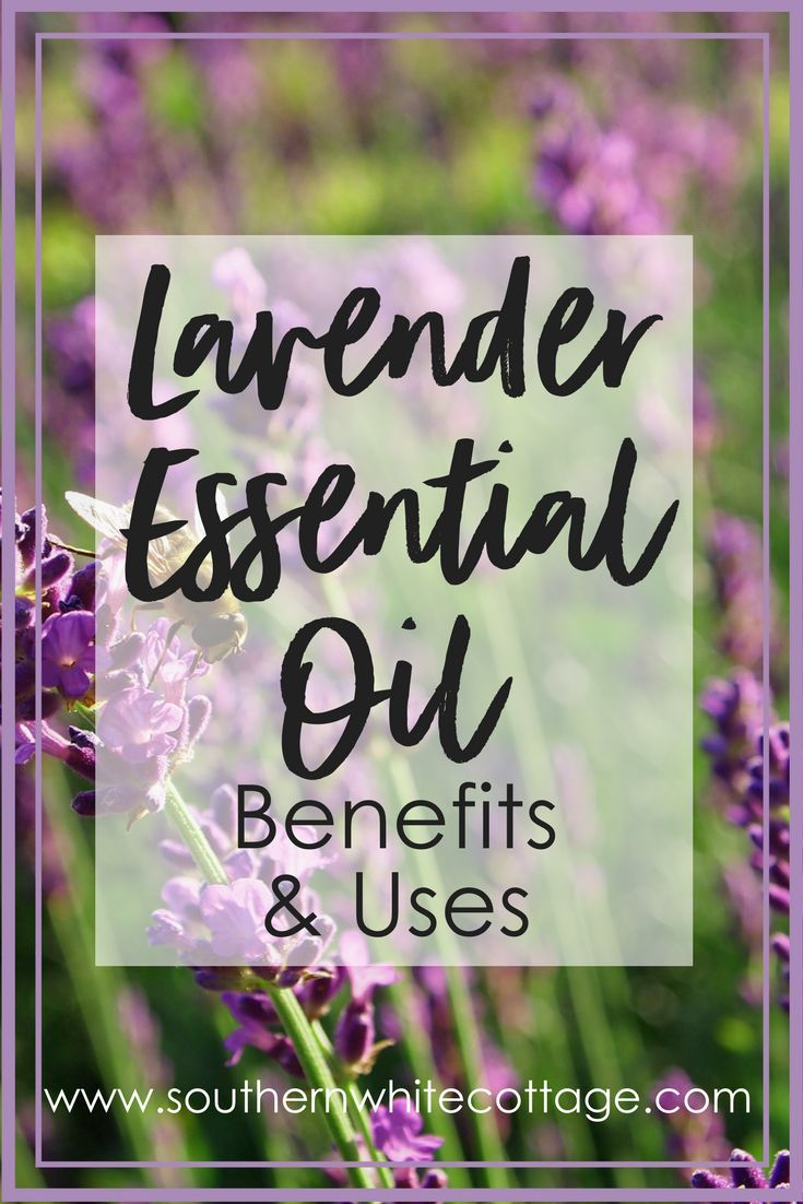 Explore Lavender Essential Oil Benefits and Uses. Lavender still remains the most commonly used essential oil. Learn how to incorporate this amazing essential oil into your everyday use. #essentialoils #doterra #lavender