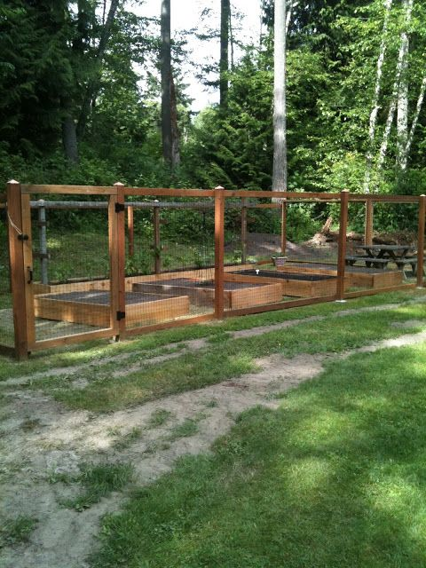 Best 25 deer fence ideas on pinterest vegetable garden for Garden bed fence ideas