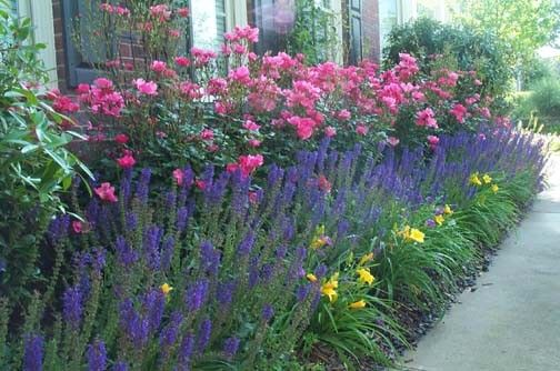 Mass plantings and hedges can provide a large splash color from spring to fall that can really liven up a landscape.  Floribundas and shrubs...
