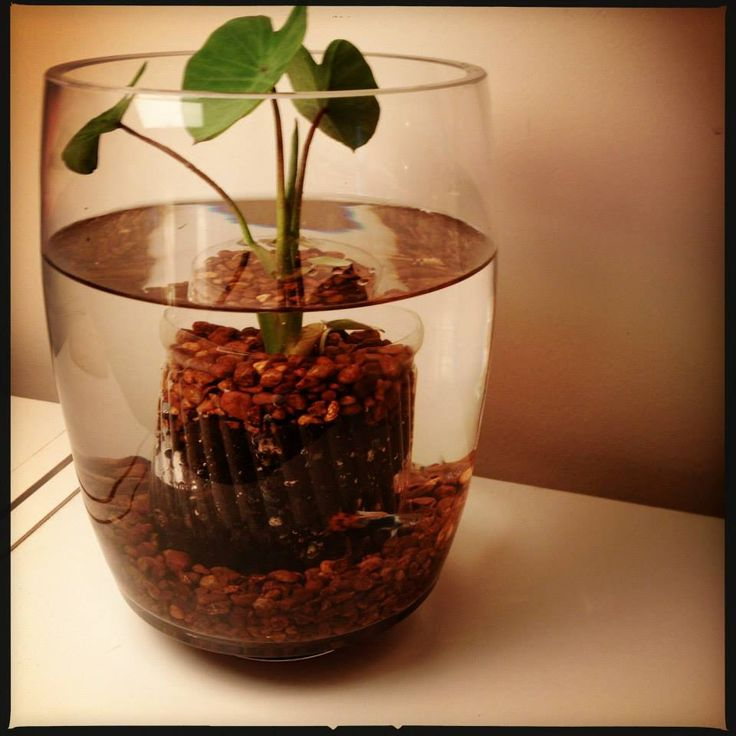 Fish ponds are a lovely addition to any garden. However, if you live in an apartment then you have to get creative with the limited space. Make a mini water garden for your tabletop