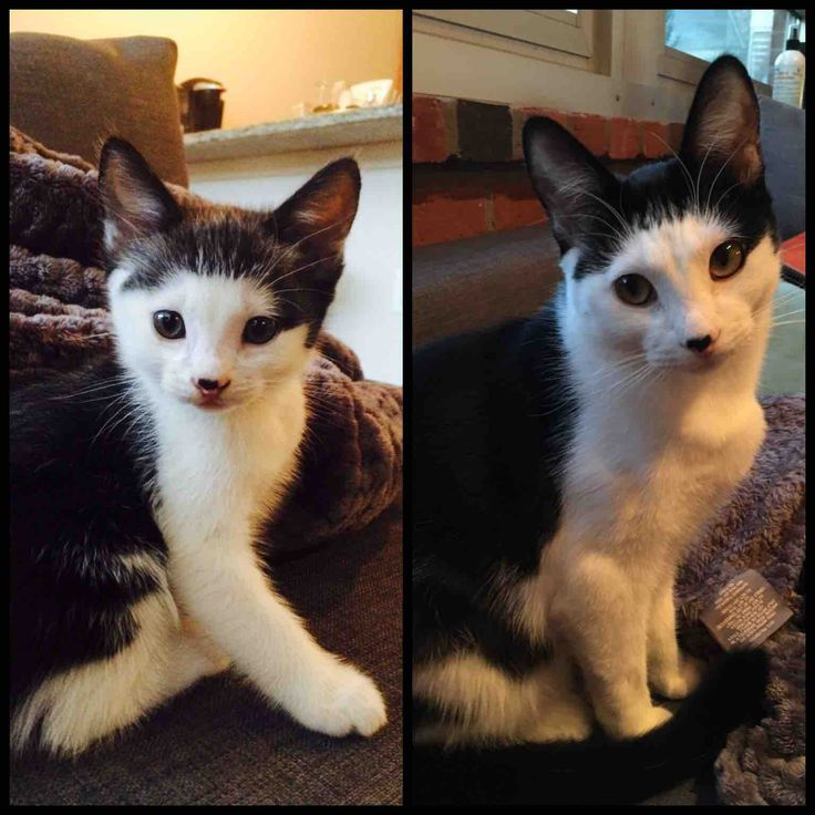 My first cat (forever baby boy) all grown up. Proud Mom. _