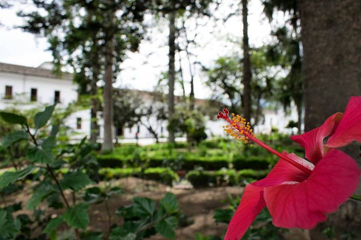 Flor en el Parque Caldas Ph: @juancabreralml  #PopayánCO