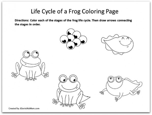 Activities Amphibians Coloring Learning Pages Cycle Frog