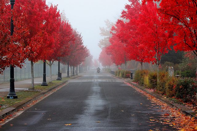 Corvallis, Oregon by Quiltsalad, via Flickr
