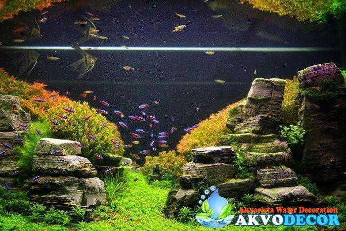 Jual Aquarium Ikan Hias di Tangerang – Jika anda tengah mencari Aquarium Ikan Hias di Tangerang, maka anda sangat tepat sekali berkunjung ke website Akvodecor.com