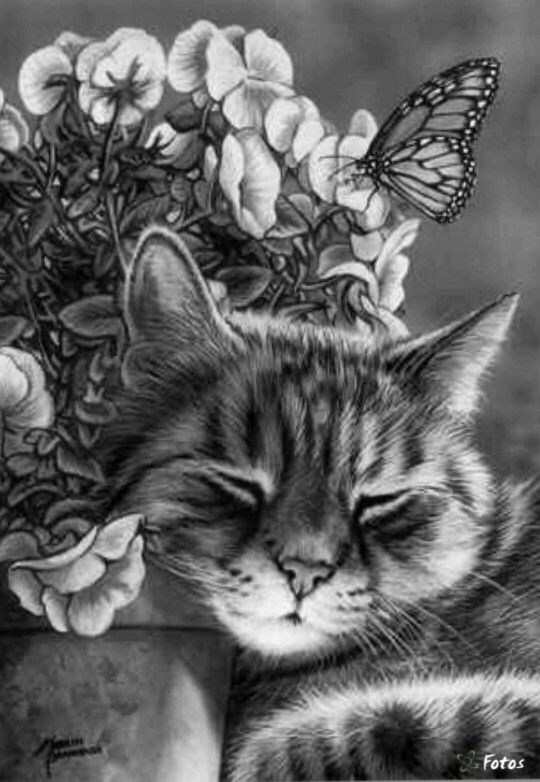 Realistic Drawings Animal Art Cat With Butterfly And