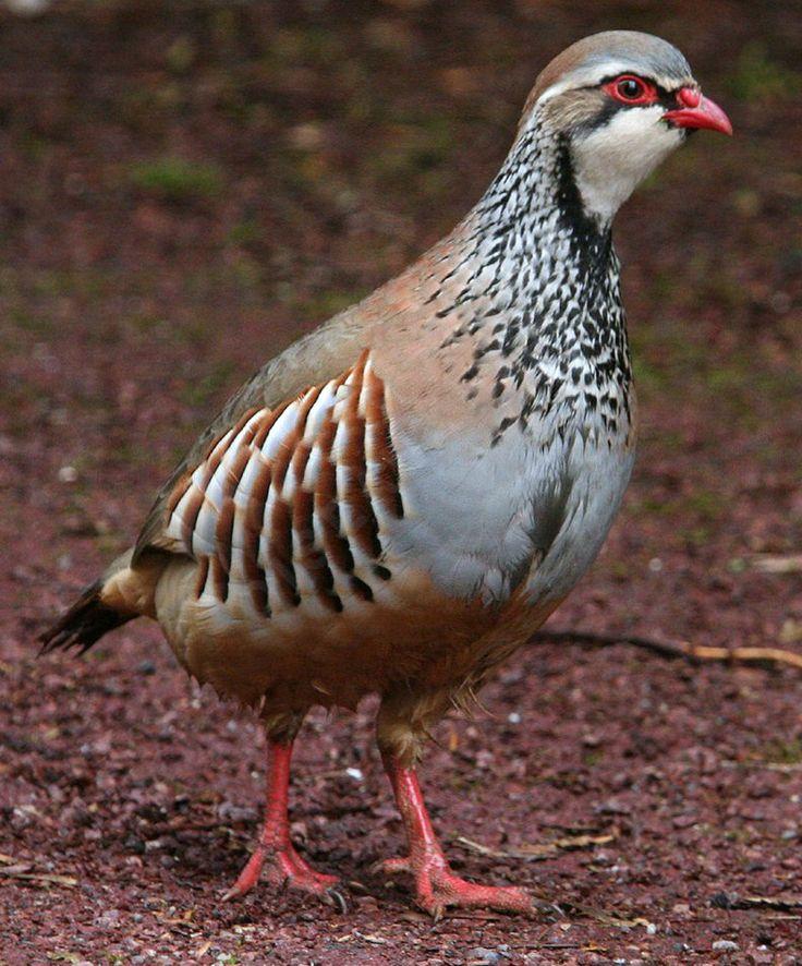 79 best oiseaux de mon jardins images on pinterest birds for Oiseaux des jardins