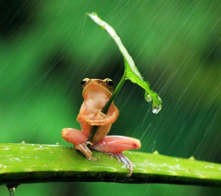 As fotos mais engraçadas de animais selvagens | Natureza - TudoPorEmail       -Mesmo os anfíbios se cansam de chuva às vezes - Olha esse aí de guarda-chuvas!