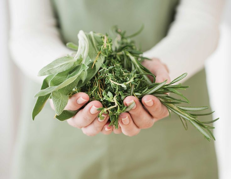 6 Medicinal Herbs You Can Grow: German chamomile, oregano, peppermint, rosemary, sage and thyme