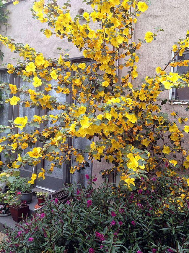54 Best Inspiration California Friendly Gardening