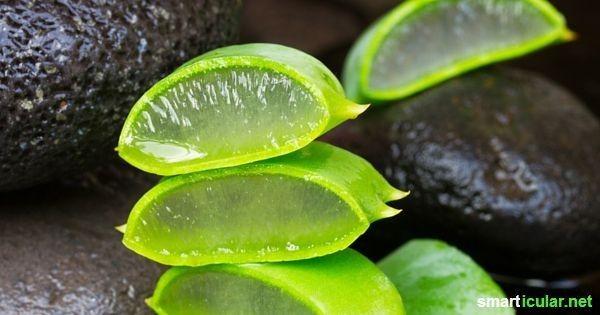 Mit Aloe vera 11 Hautpflegeprodukte spielend ersetzen