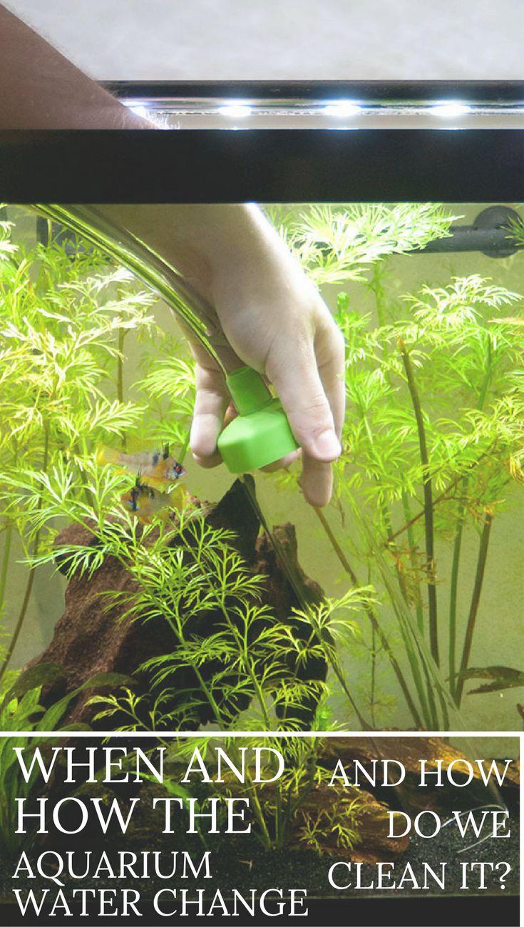 Fish aquarium cleaning tips - Fish Aquarium Cleaning Tips 48