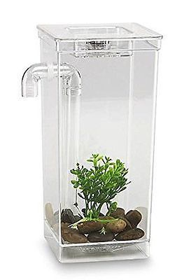 Best 20 small fish tanks ideas on pinterest aquatic for How to clean a 10 gallon fish tank