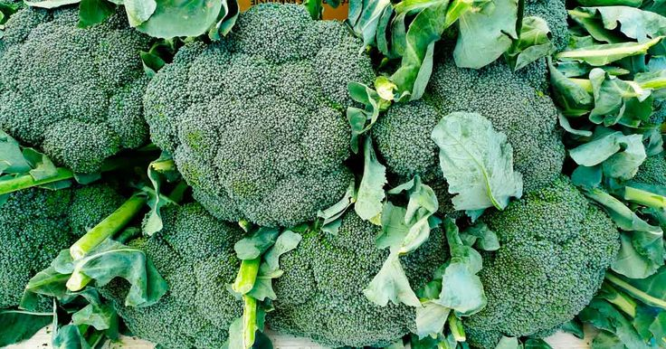 Here are five impressive reasons why you should eat broccoli almost every day. http://articles.mercola.com/sites/articles/archive/2013/11/09/broccoli-benefits.aspx