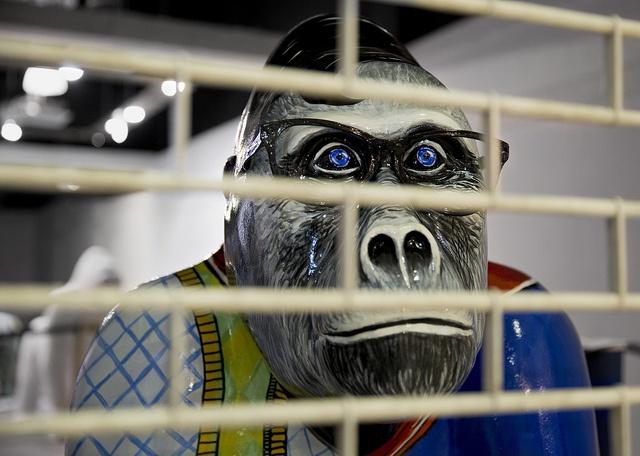 Gorilla behind Bars