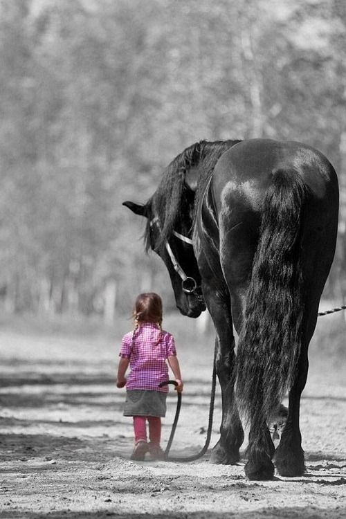 love this picture. really shows the gentlesness of these wonderful animals.