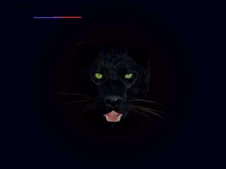 Black Panther Animal Hd Wallpaper New 49 Free Black Panther Wallpaper On Wallpapersafari Of B In 2020 Black Jaguar Animal Animal Wallpaper Black Panther Hd Wallpaper