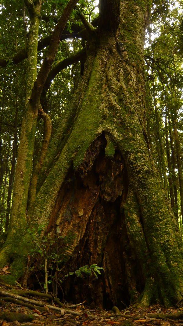 Tihue in park Edmundo Winkler, Frutillar, Chile