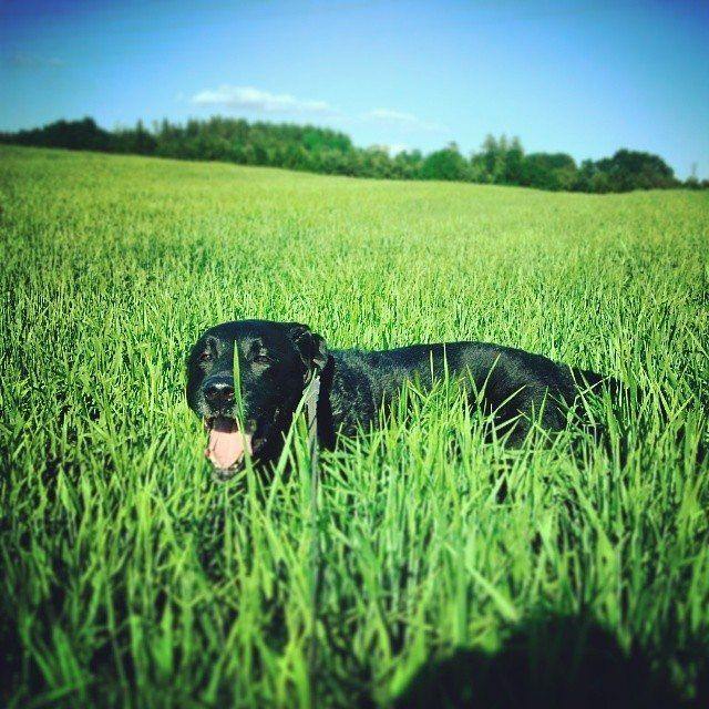 #dog #happydog