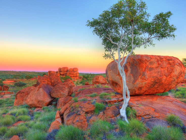 Ghost Gum Contrasts, Devil's Marbles, Northern Territory, Australia