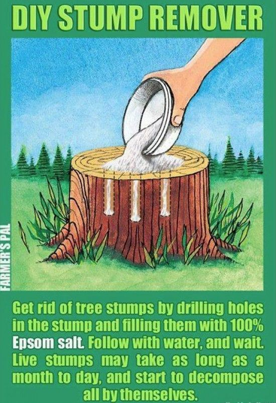 How to Kill a Tree Stump Tutorial