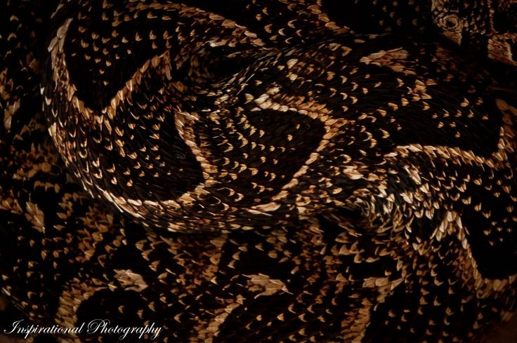 Amazing picture of a snake up close. Photo taken by Kyle Ansell