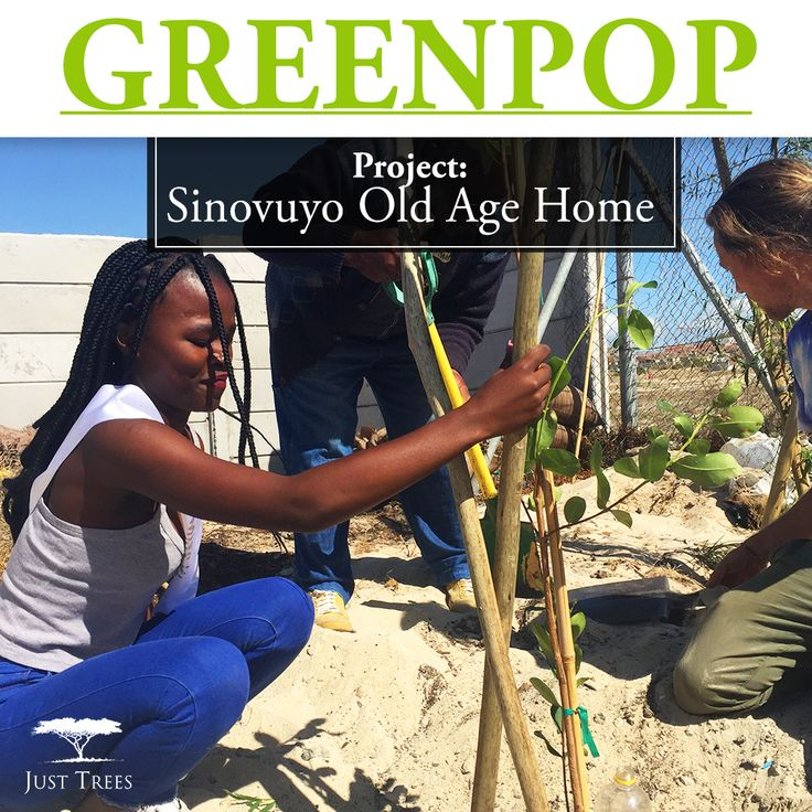 On the first of April 2017, we donated 39 Olea europaea subsp. africana 10L to the Khayelitsha-based Sinovuyo Old Age Home. We were more than happy to join Greenpop in adding greenery for those living there to enjoy for years to come!