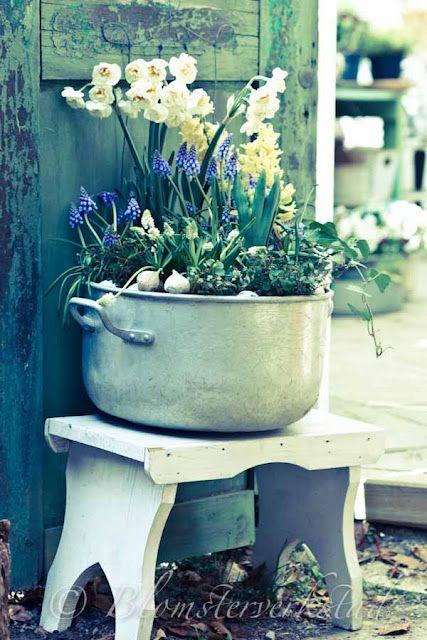 Cute, in an old pot!